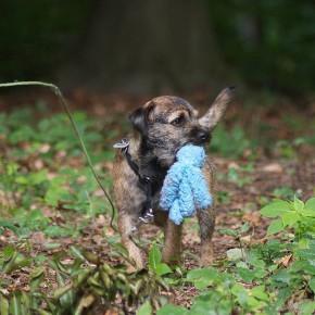 Auf der Pirsch: gemeinsam Beute machen mit dem Hund am 13.08.2016