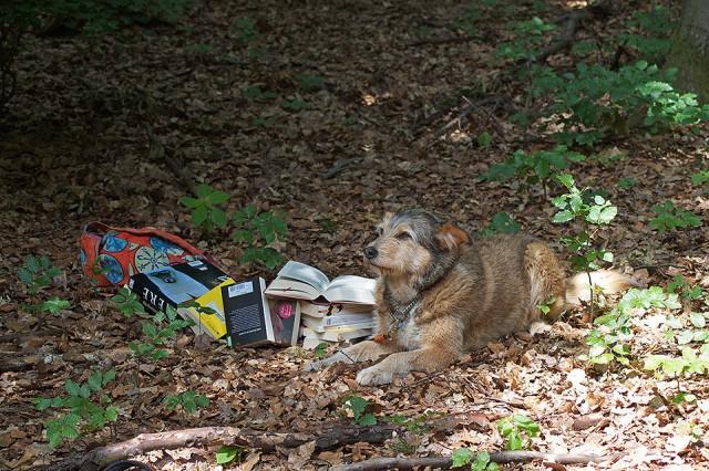 Hund, Literaturtipps