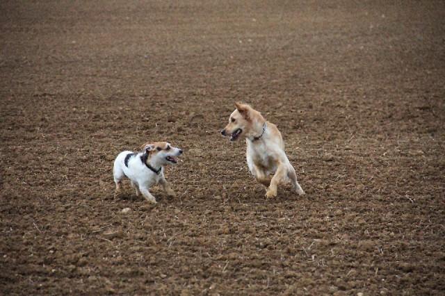 Hund, Kommunikation