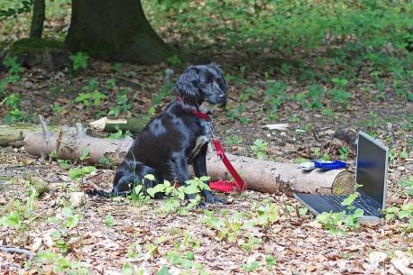 Kontakt - Hundeschule freieschnauze